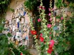 Bisbee Hollyhocks